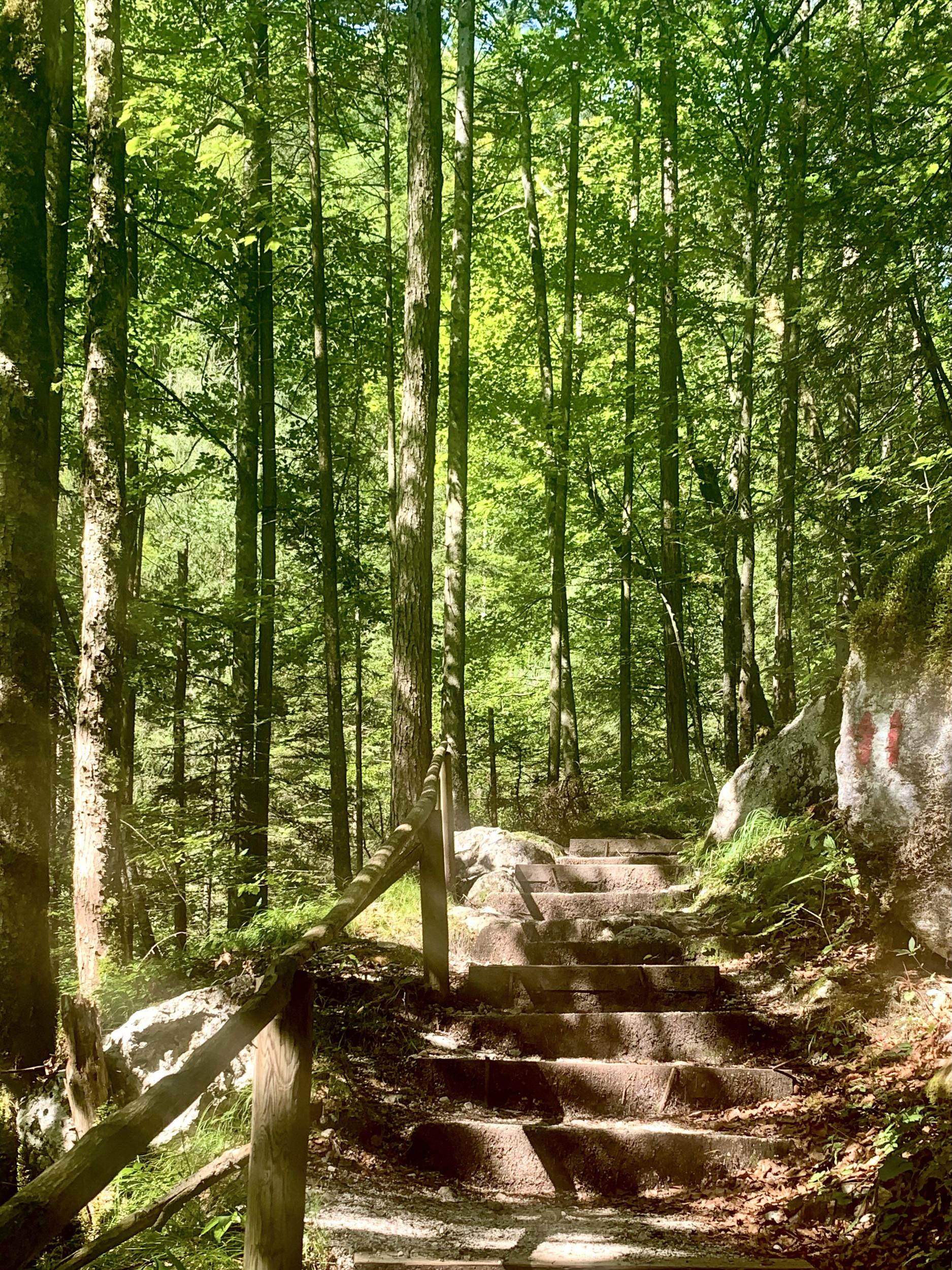 Aufstieg zur Waldbachstrub