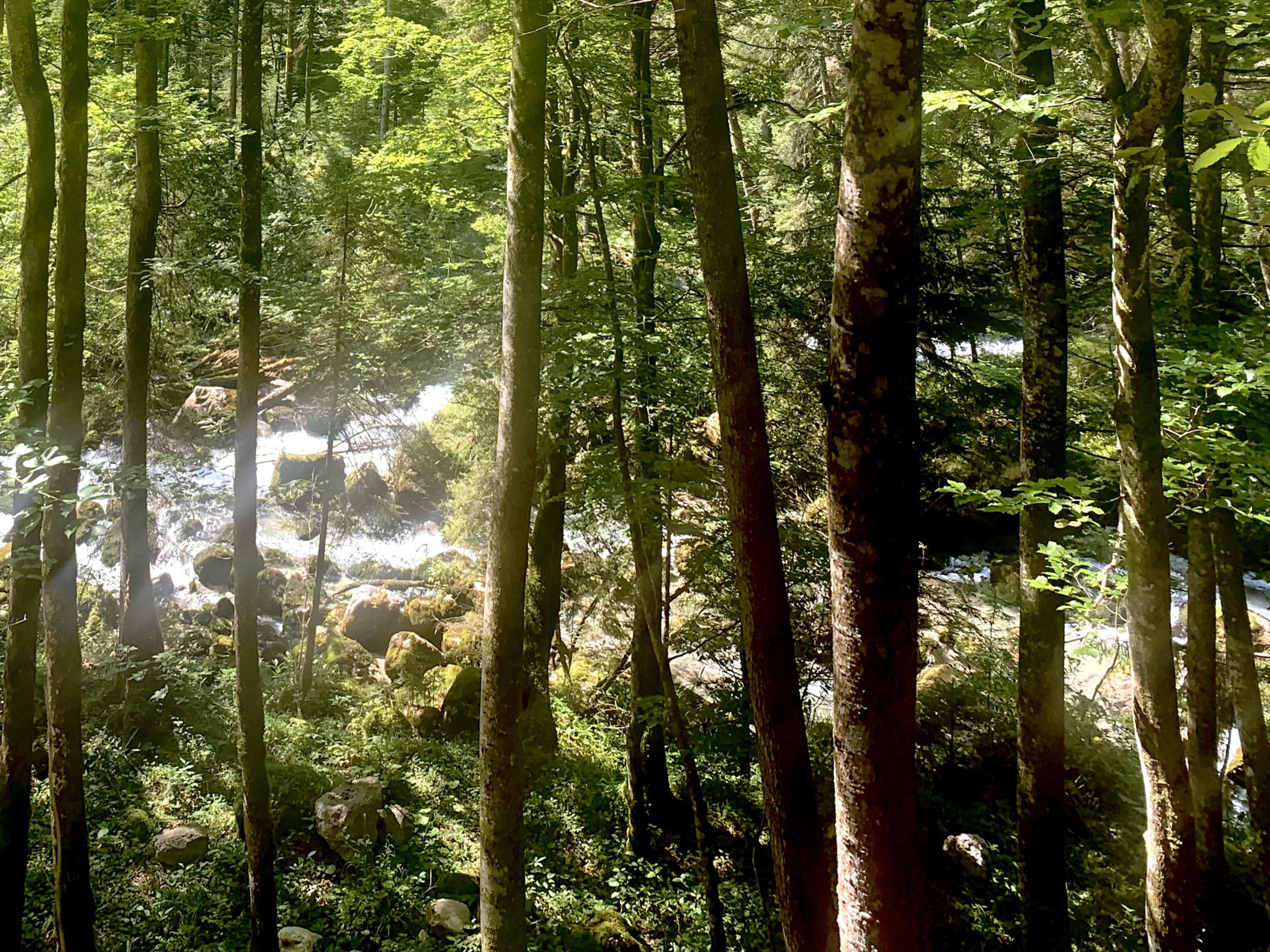 Der Waldbach im hinteren Echerntal