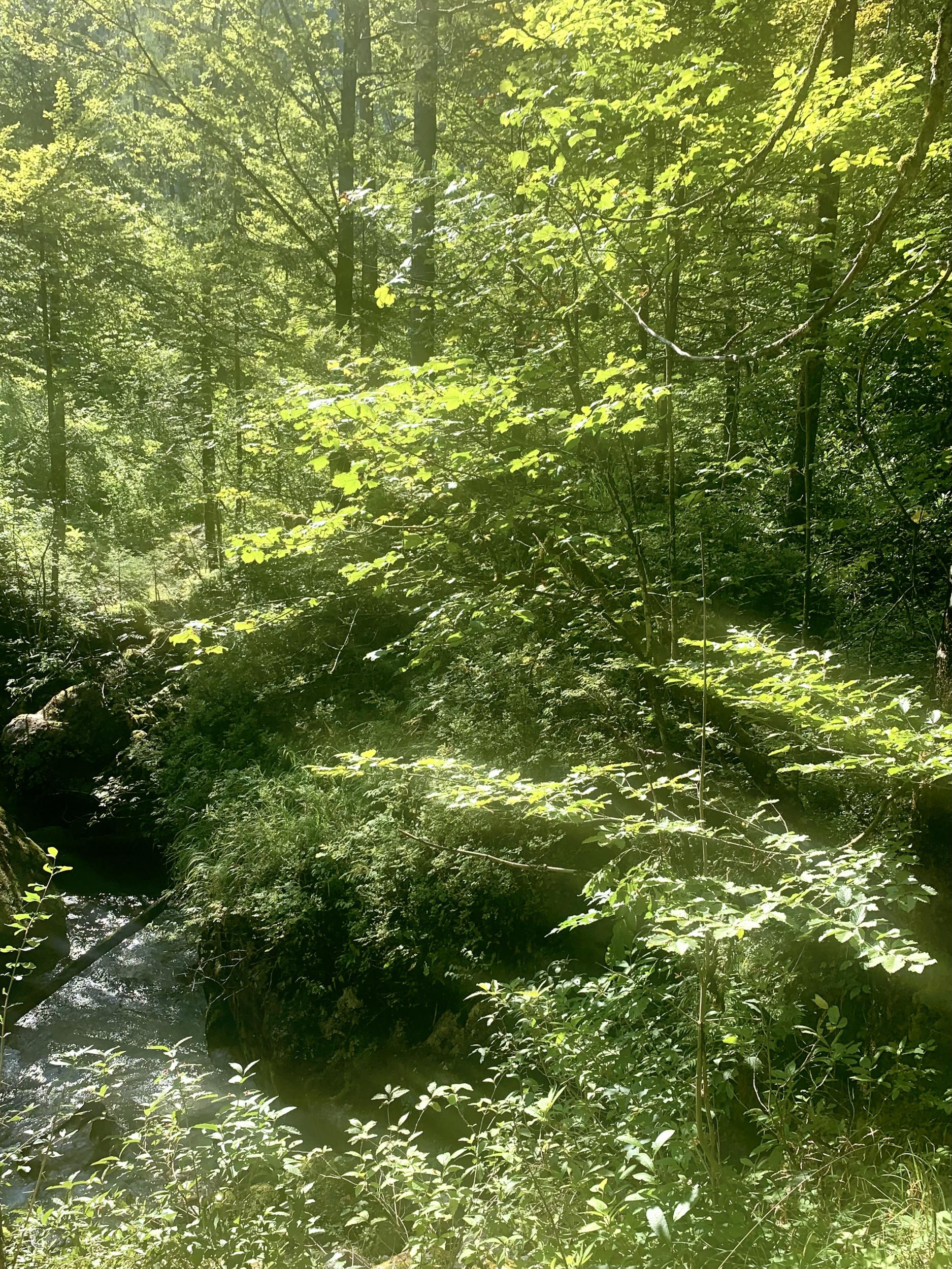 Waldbach in der Mitte des Echerntales