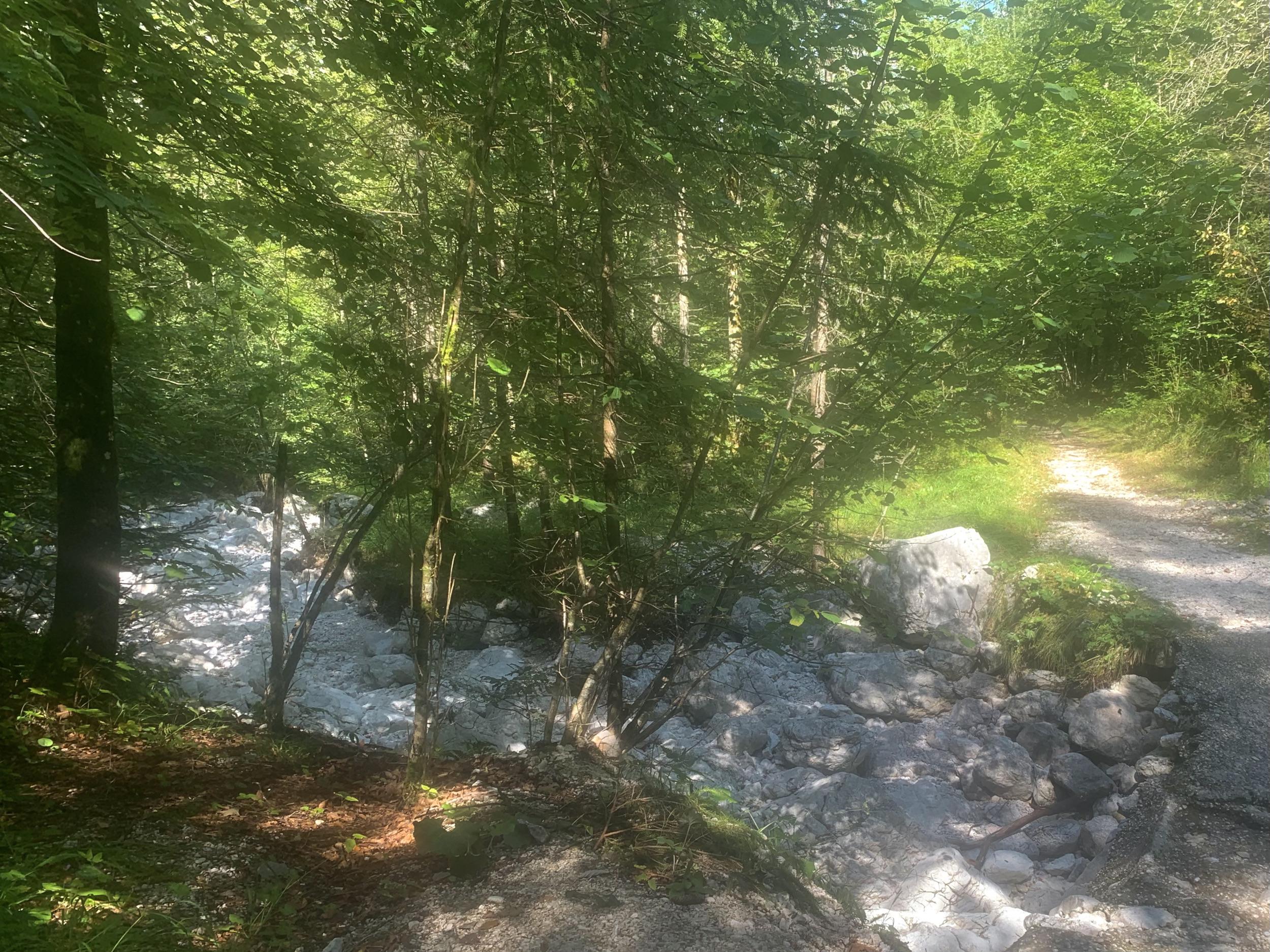 Der Weg über den Brandbach im Echerntal