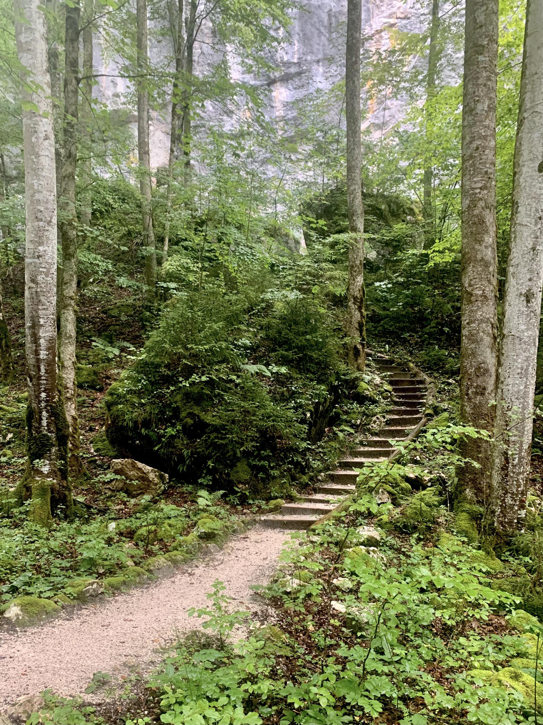 Der Weg zum Waldbachstrub